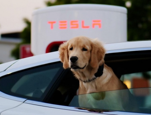 Solar panels are a must have for any electric car owner